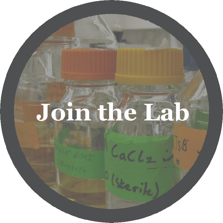 Join the Lab